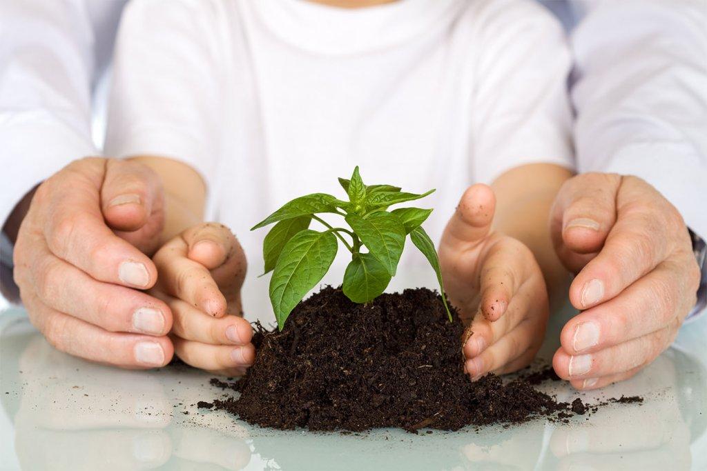 nutición para raíz