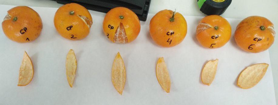 Mandarinas tratadas con Calcifol Plus SN