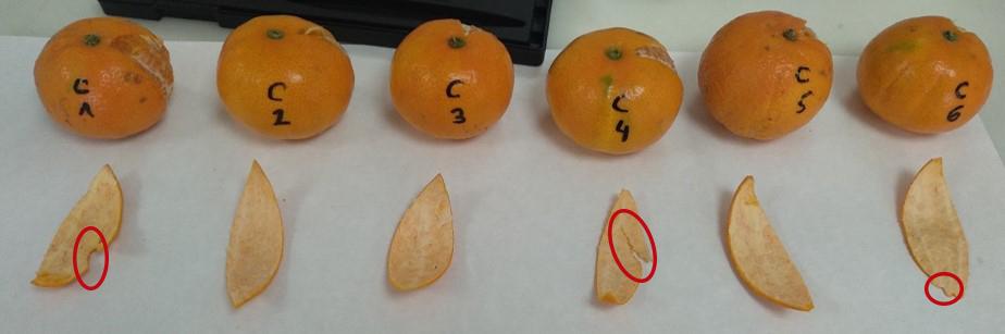 Mandarinas sin tratar.