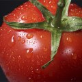 tomate totem
