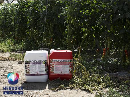 Productos Herofol Denso Fosfatado y Rojo en plantación de tomate